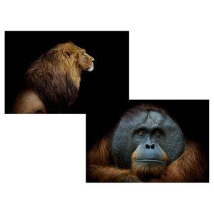 tableau lion gorille