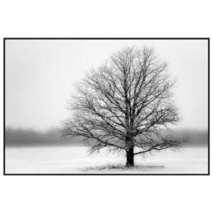 tableau-impression-sur-verre-arbre-noir-blanc-froid-decoration-murale-nature-boisetdeco-cambresis-nord